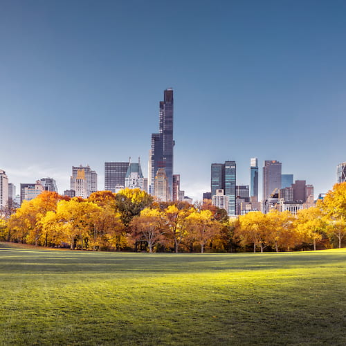 "Photo Release: ""Good Morning, Central Park"" by Dan Piech"