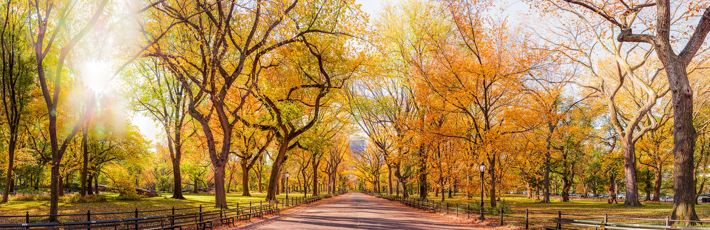 4,103 megapixels! A very high definition VAST photo of autumn trees on the Mall in Central Park in New York City at sunrise; created by Dan Piech