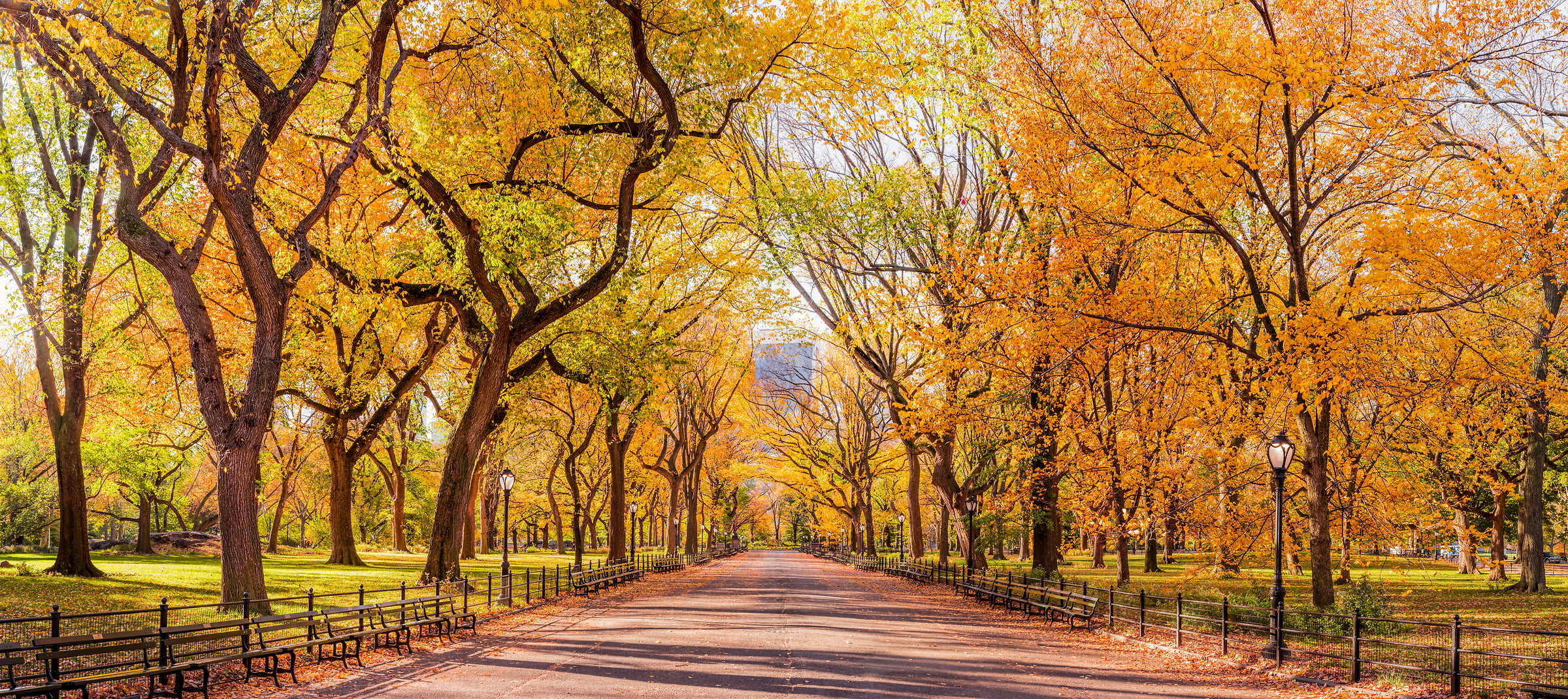 1,754 megapixels! A very high definition VAST photo of autumn trees on the Mall in Central Park in New York City at sunrise; created by Dan Piech