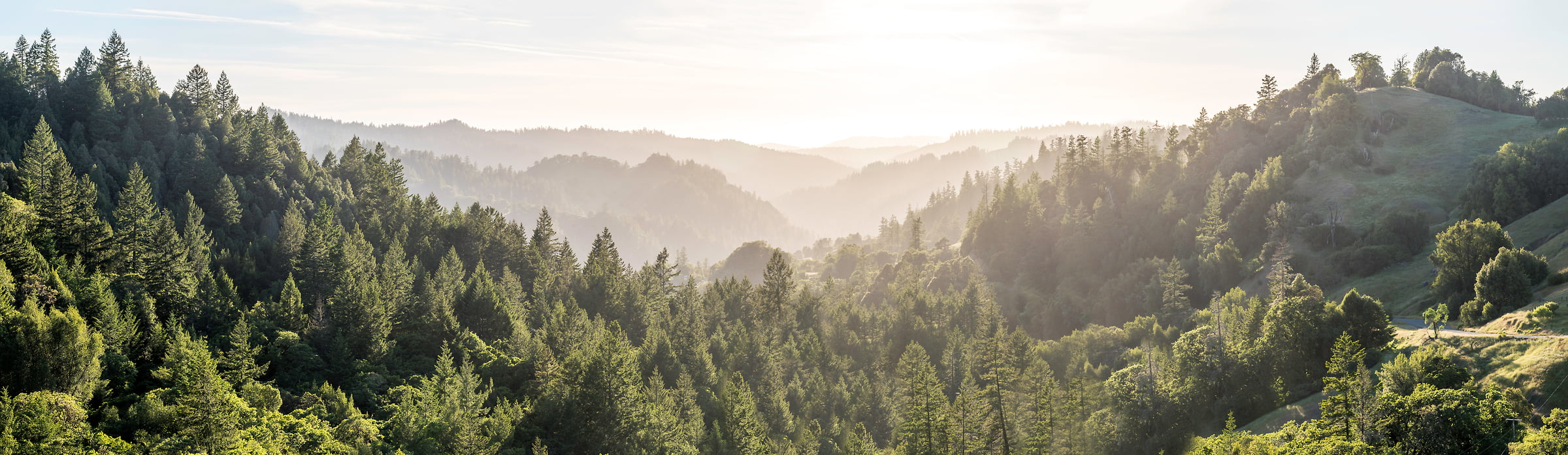 223 megapixels! A very high resolution, large-format VAST photo of the hills in California with forests; fine art landscape photo created by Justin Katz in Northern California