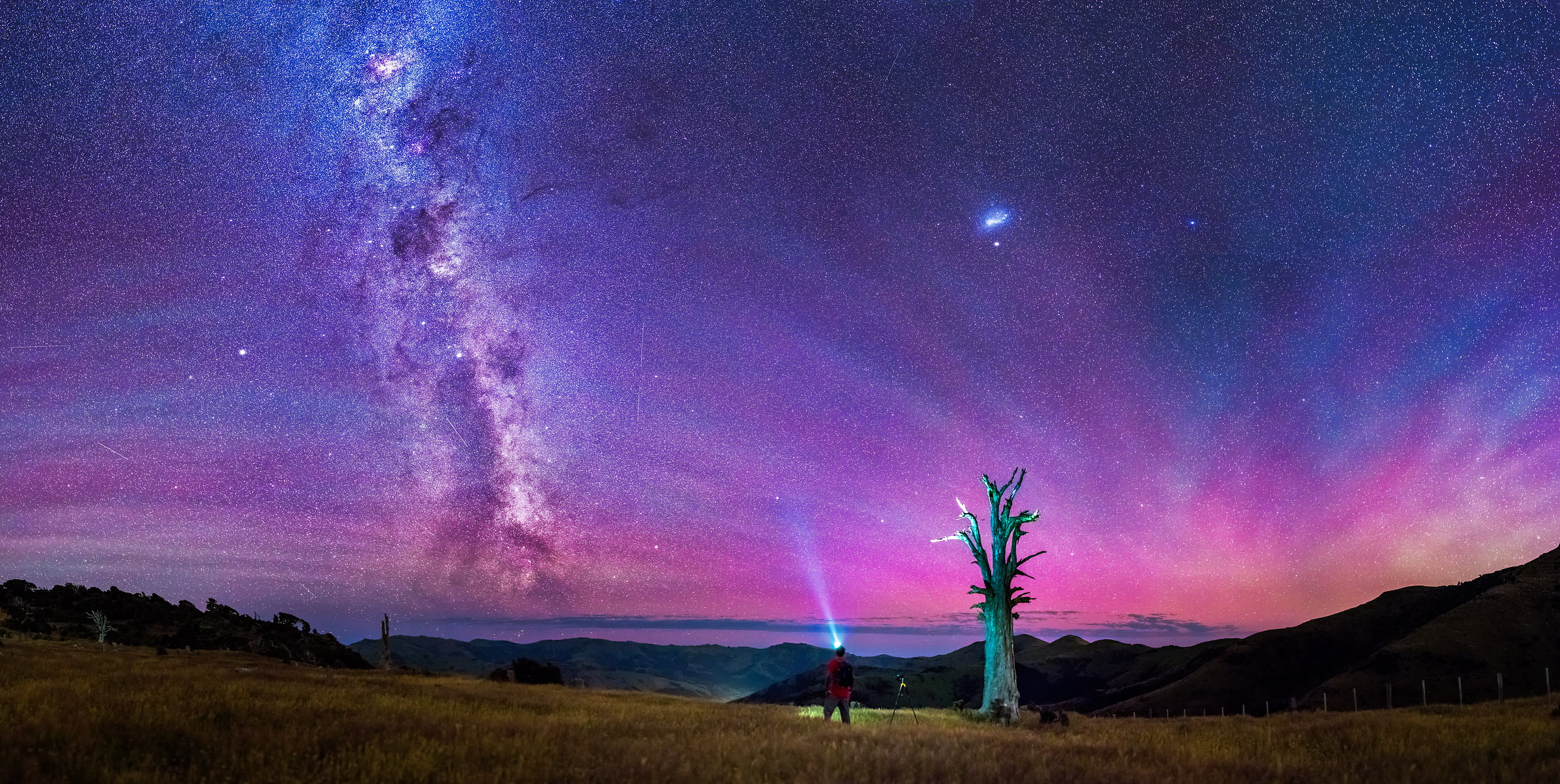 200 megapixels! A very high resolution, large-format VAST photo print of the night sky, milky way, and stars over a dead tree and a person photographing; fine art astrophotography landscape photo created by Paul Wilson in Port Levy Saddle, Canterbury, New Zealand