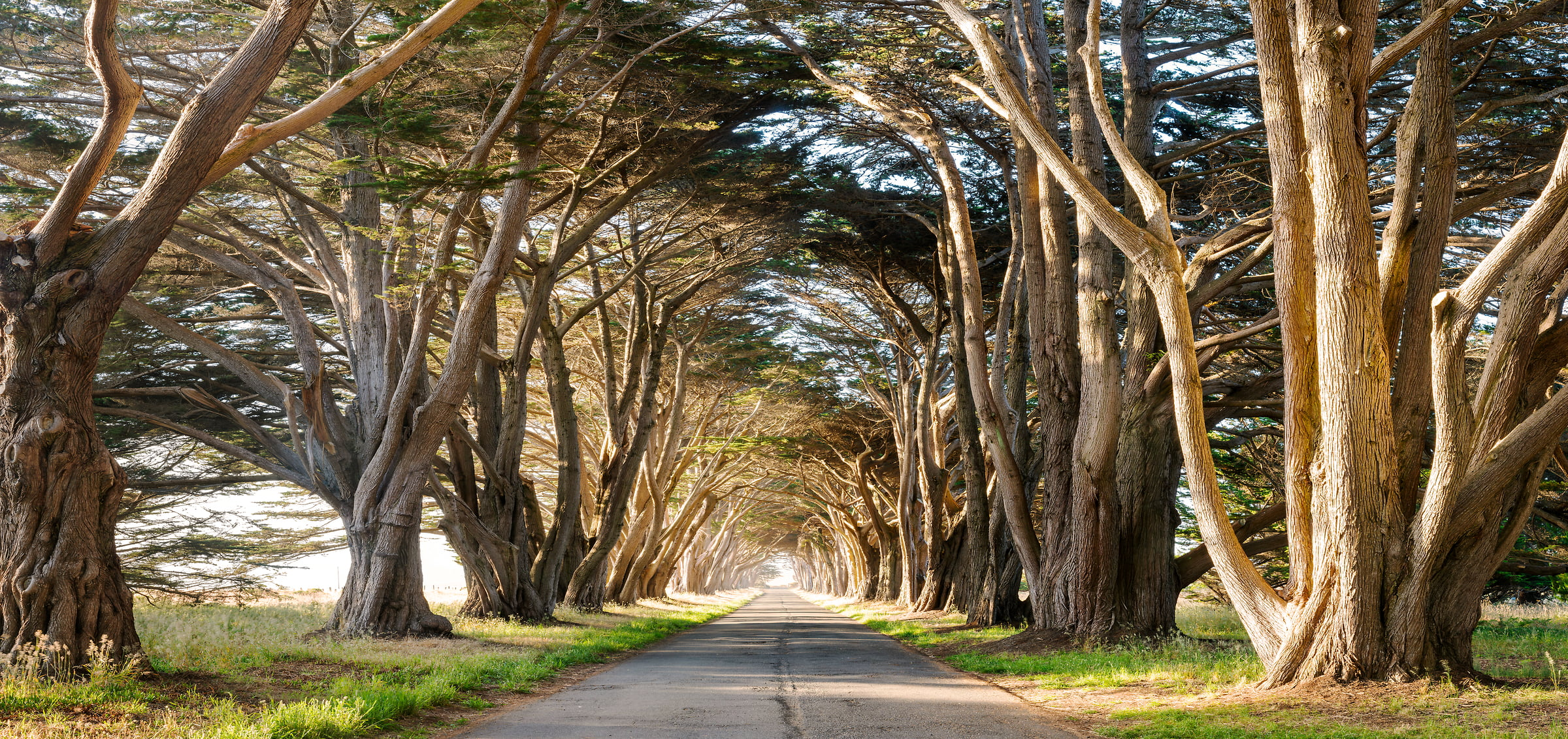 535 megapixels! A very high resolution, large-format VAST photo of a tunnel of cypress trees with a road going down the middle; fine art nature photograph created by Justin Katz in Point Reyes National Seashore, California
