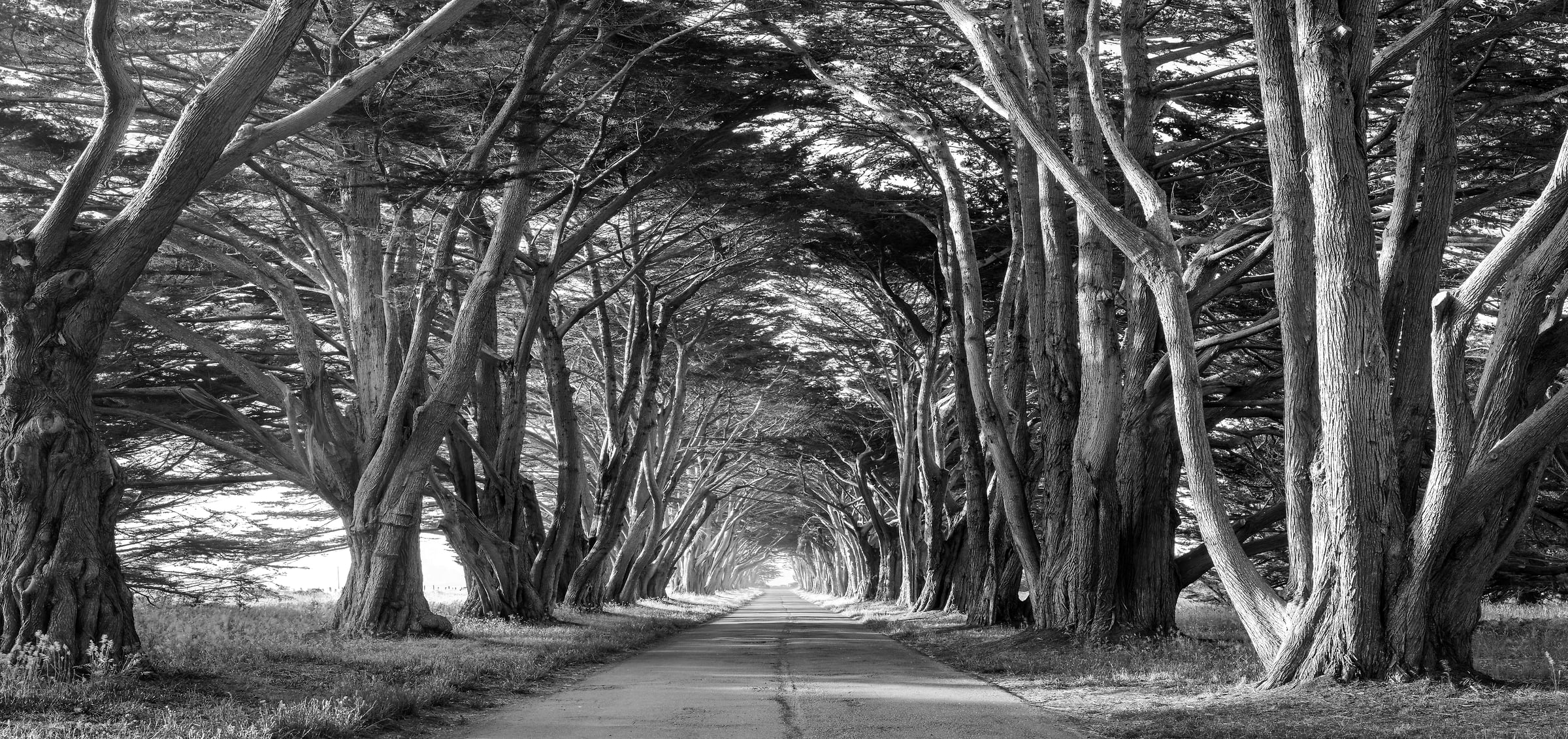 535 megapixels! A very high resolution, large-format, black & white, VAST photo of a tunnel of cypress trees with a road going down the middle; fine art nature photograph created by Justin Katz in Point Reyes National Seashore, California