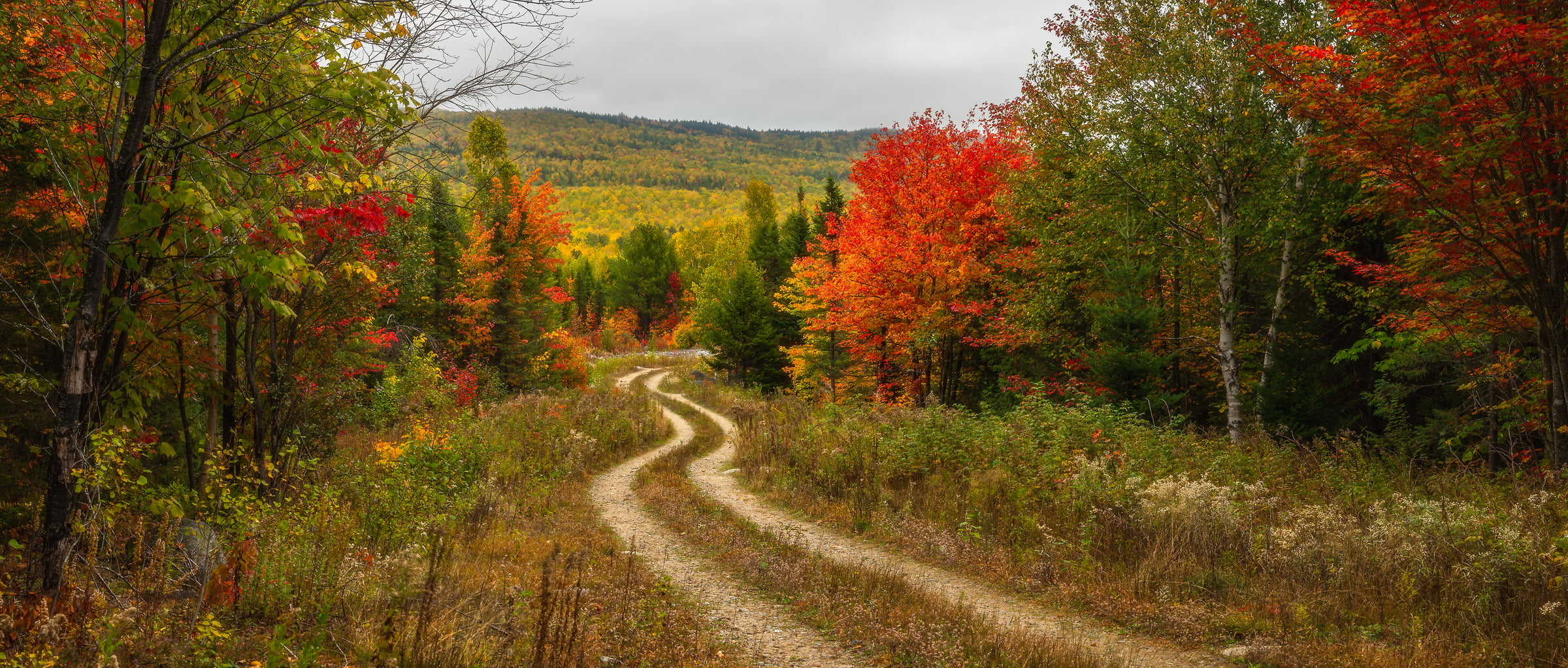 119 megapixels! A very high resolution, large-format photo of colorful fall foliage, leaves, and a winding dirt road; fine art photograph created by Aaron Priest in Northeast Piscataquis, Maine
