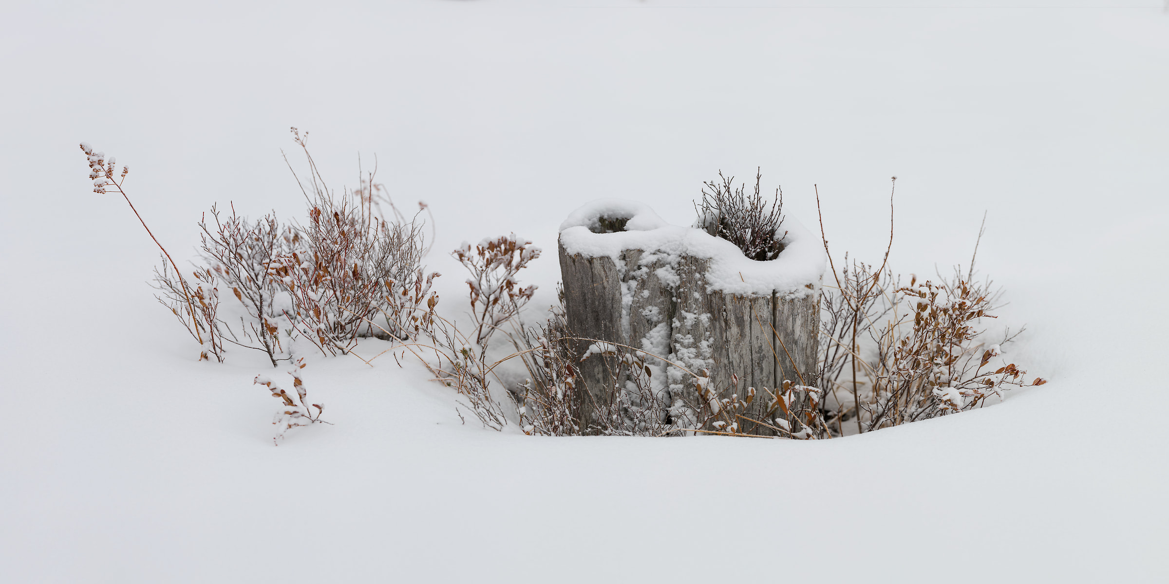 395 megapixels! A very high resolution, large-format photo print of bushes and a stump in the snow; fine art nature photograph created by Aaron Priest on Golden Road in Maine, New England