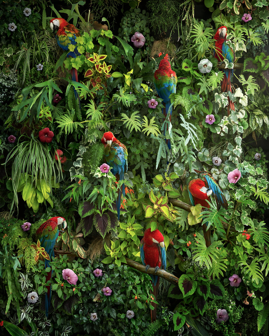 180 megapixels! A very high resolution photographic artwork of a living wall with foliage, flowers, plants, greenery, ferns, parrots, macaws and birds; artwork created by artist Nick Pedersen