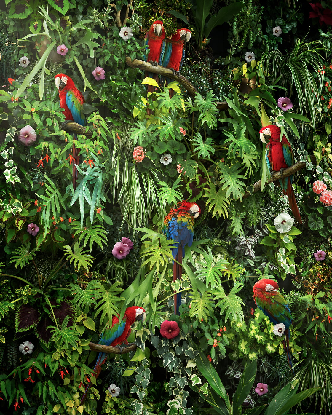 180 megapixels! A very high resolution nature artwork of a living wall with foliage, flowers, plants, greenery, ferns, parrots, macaws and birds; artwork created by artist Nick Pedersen