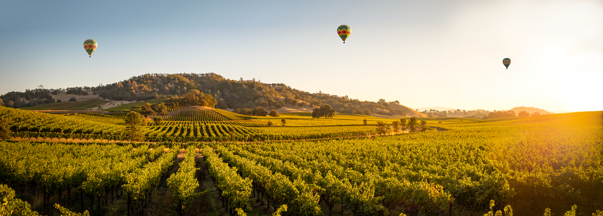 230 megapixels! A very high resolution, large-format VAST photo of a Napa Valley vineyard with hot air balloons and sunlight; landscape photo created by Justin Katz in Pope Valley, Napa Valley, California