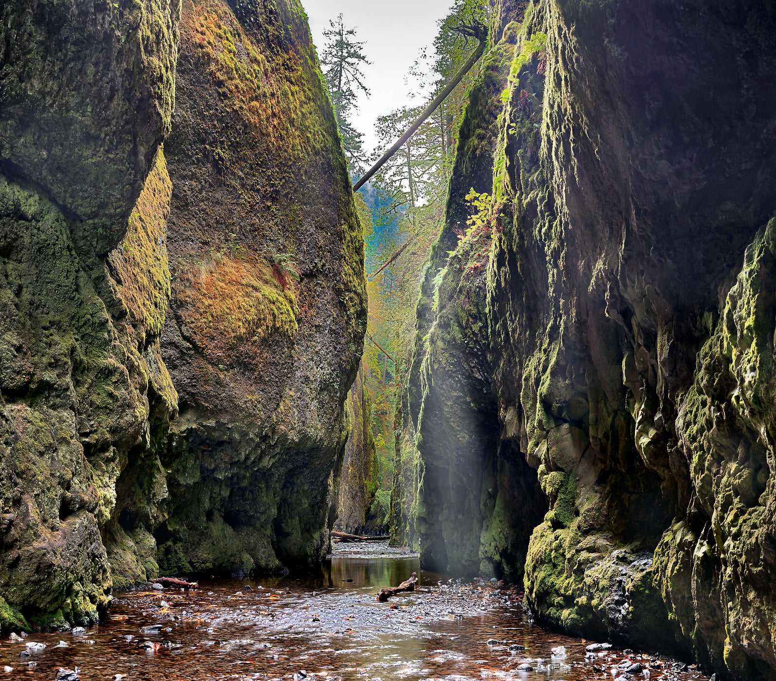 244 megapixels! A very high resolution nature photo of a hidden forest; VAST photo created by Phil Crawshay in Oneonta Gorge, Portland, Oregon