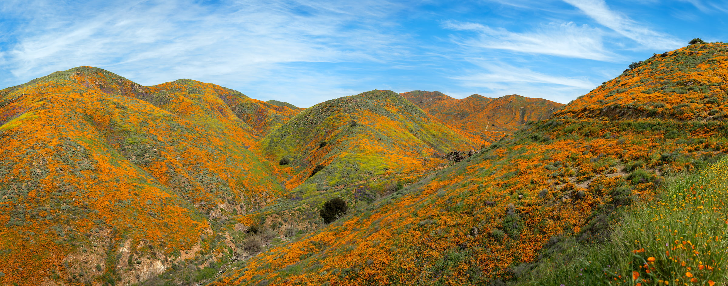 1,153 megapixels! A very high resolution, large-format VAST photo print of poppy wildflowers on the rolling hills and valleys of Walker Canyon; landscape photograph created by Jim Tarpo in Walker Canyon, California