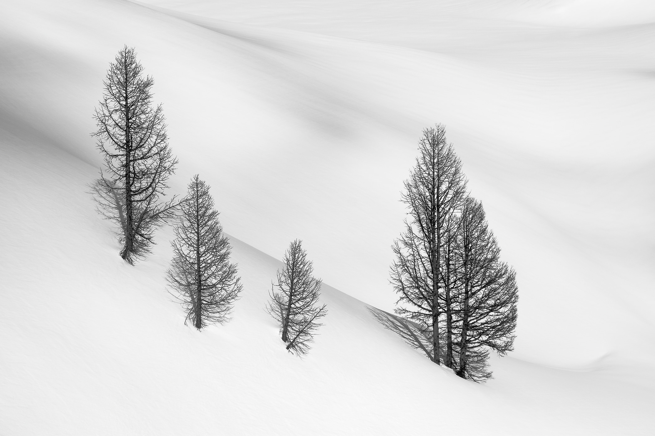 21 megapixels! A very high resolution, large-format VAST photo print of a grove of trees in the snow; black and white photograph created by Scott Rinckenberger in Bannock Mountain, Glacier Peak Wilderness, Washington