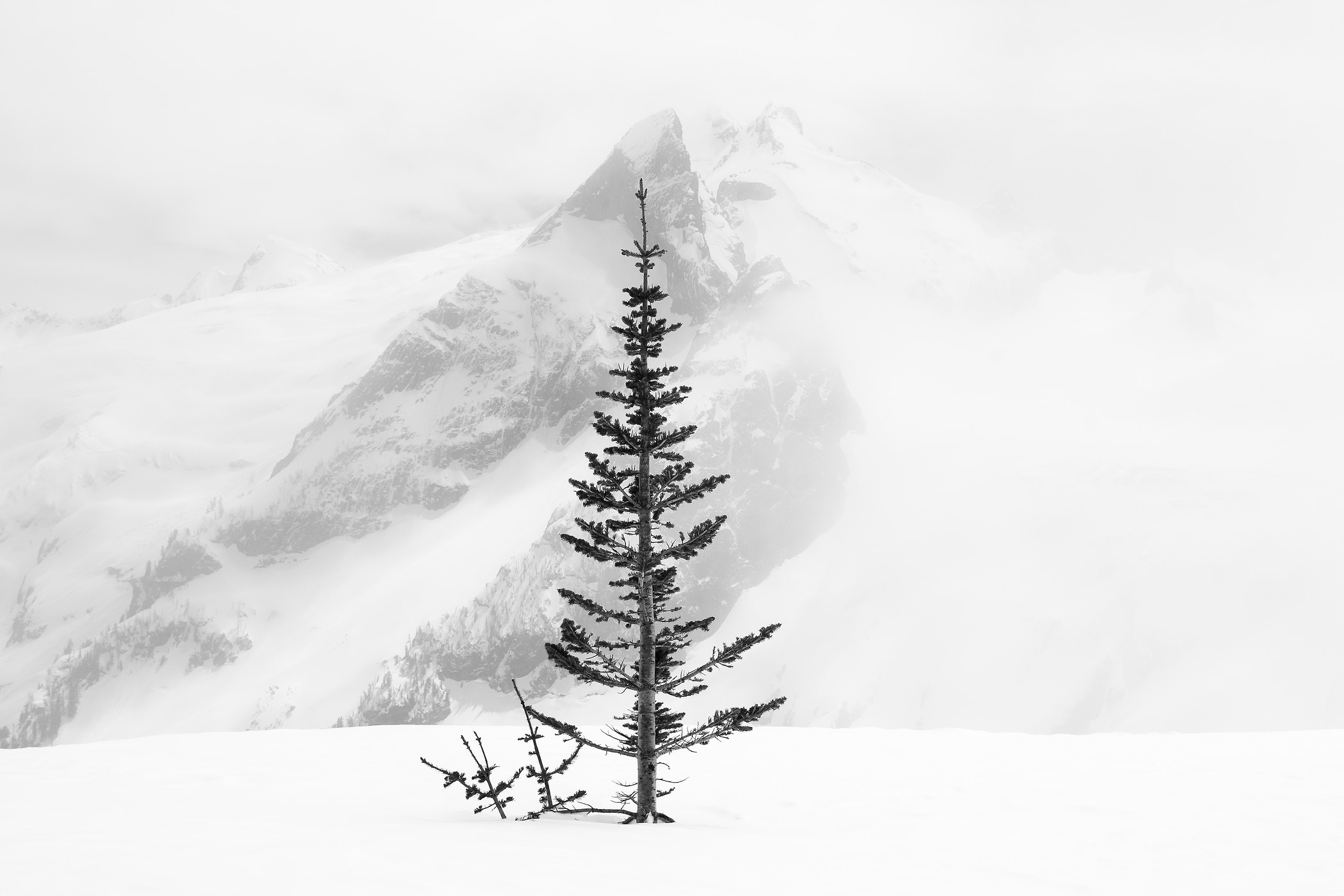 17 megapixels! A very high resolution, large-format VAST photo print of a lone tree in snow in front of a mountain; black and white photograph created by Scott Rinckenberger in Dome Peak, Glacier Peak Wilderness, Washington