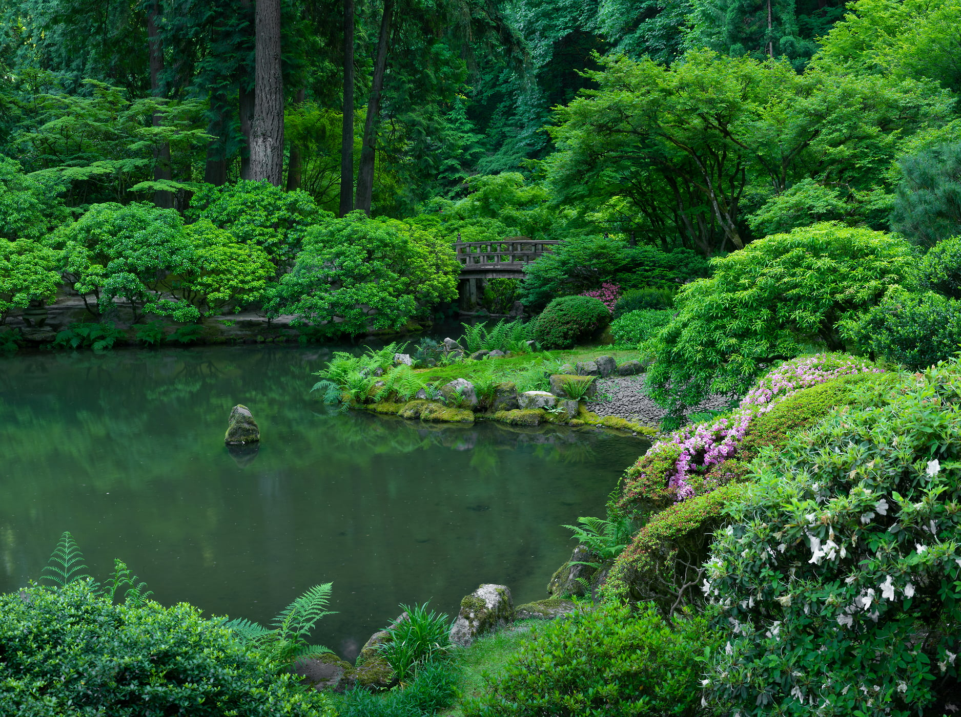 208 megapixels! A very high resolution, large-format VAST photo print of a garden pond with a bridge and forest; photograph created by Greg Probst in Portland Japanese Garden