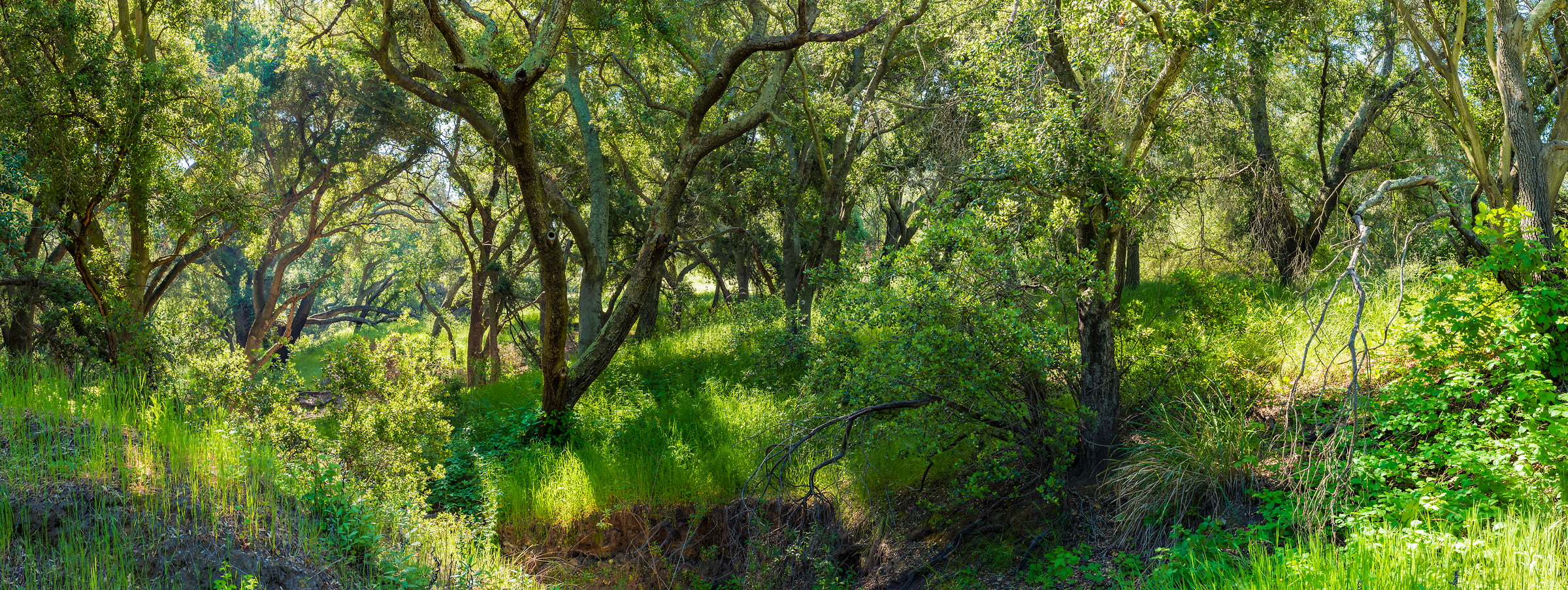 193 megapixels! A very high resolution, large-format VAST photo print of a green nature scene; wallpaper photograph created by Jim Tarpo in Silverado, California