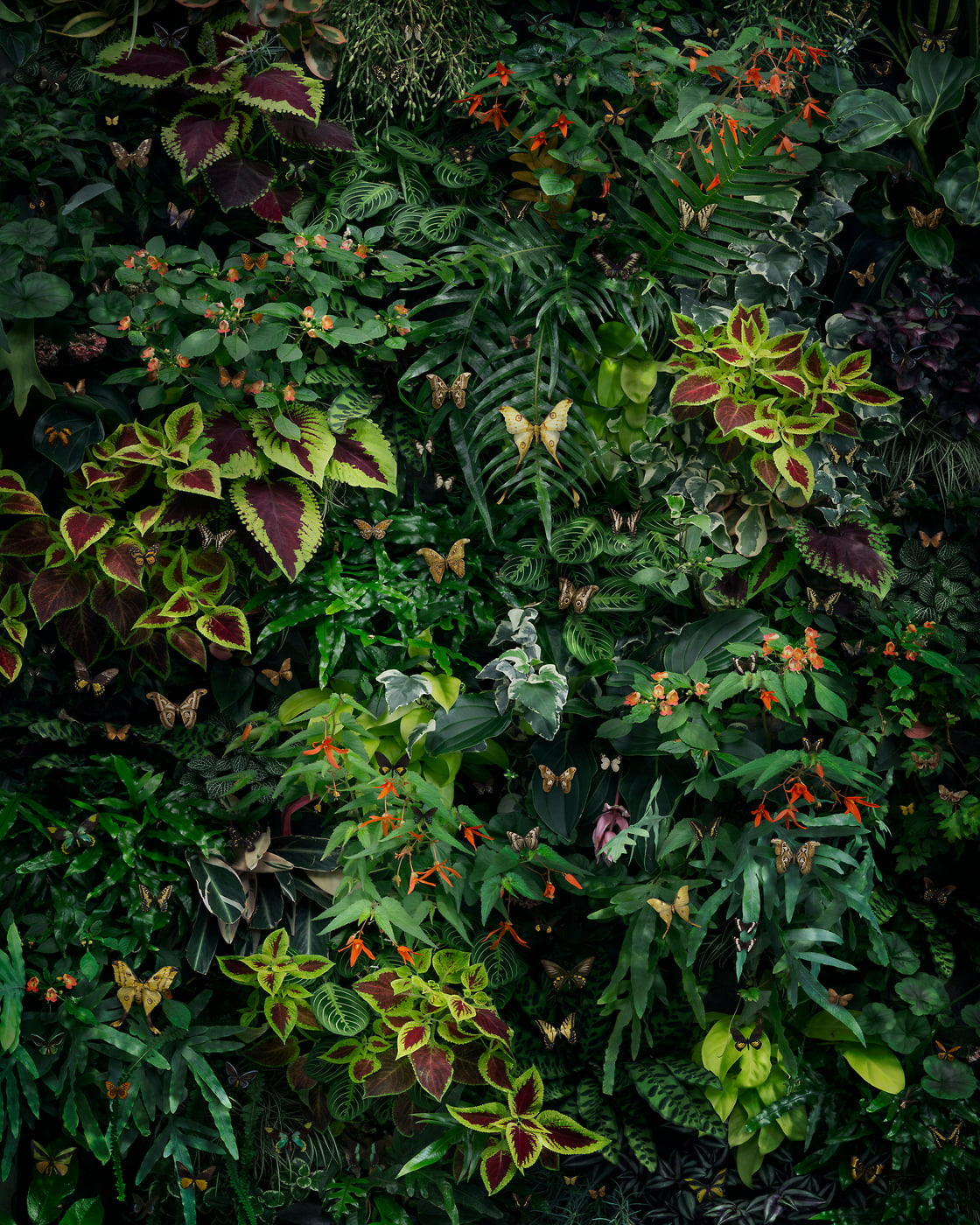 180 megapixels! A very high resolution, large-format VAST photo print of plants covering the ground; photograph created by Nick Pedersen