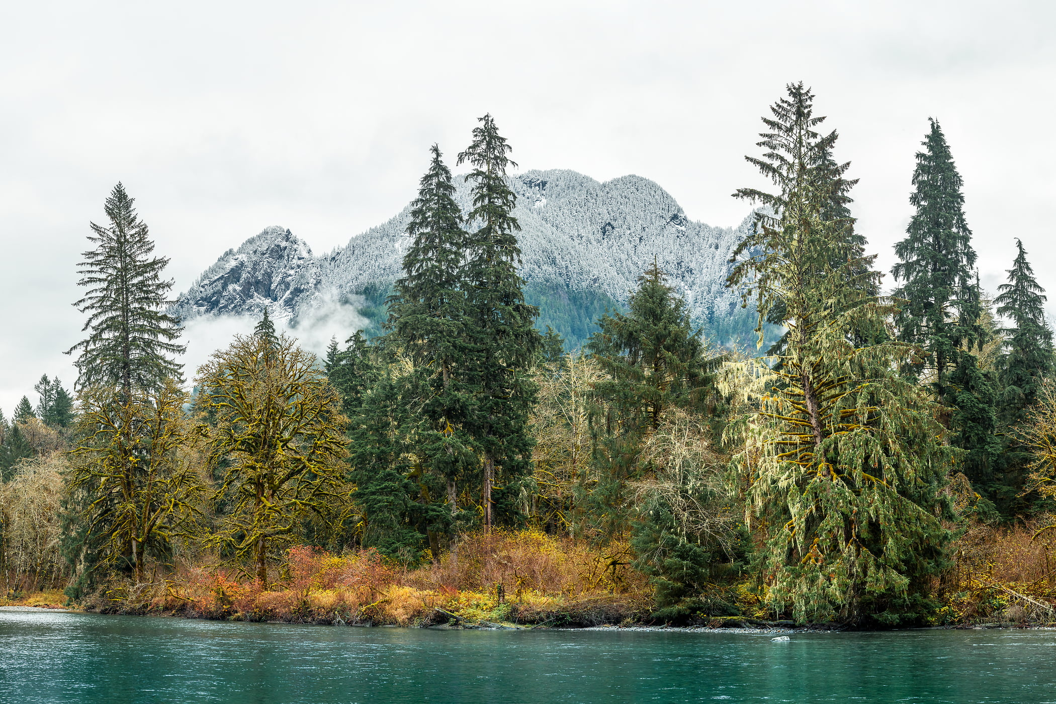 357 megapixels! A very high resolution, large-format VAST photo print of a river with evergreen trees and a mountain; nature photograph created by Scott Rinckenberger in Middle Fork of Snoqualmie River, North Bend, Washington